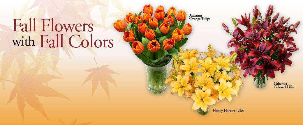 Fresh Cut Flowers & Spring Flowering Bulbs: Tulips.com - photo #6