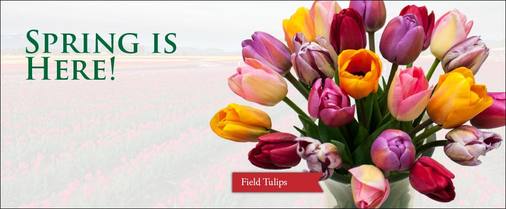 Fresh Cut Flowers & Spring Flowering Bulbs: Tulips.com - photo #46