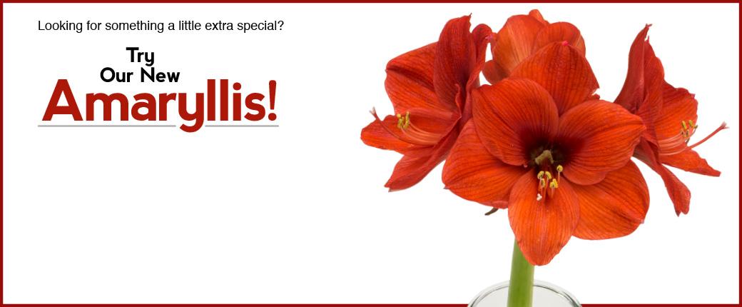 Fresh Cut Flowers & Spring Flowering Bulbs: Tulips.com - photo #21