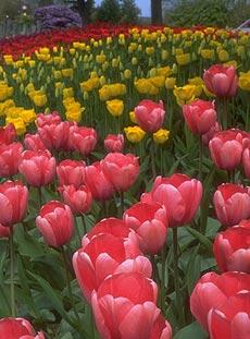 Incredible show gardens