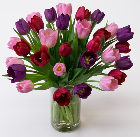 Purple, Red & Light Pink Cut Tulips