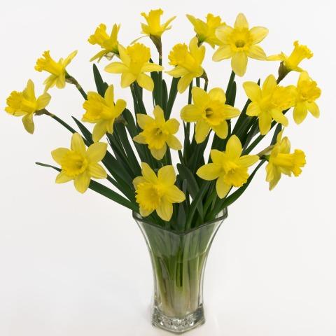 Field Daffodils