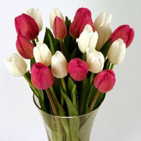 Pink & White Cut Tulips