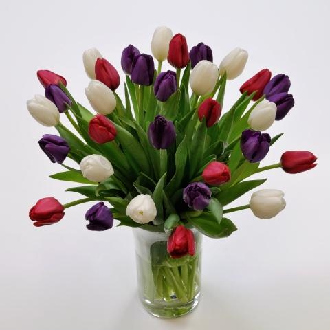 Purple, Red & White Cut Tulips