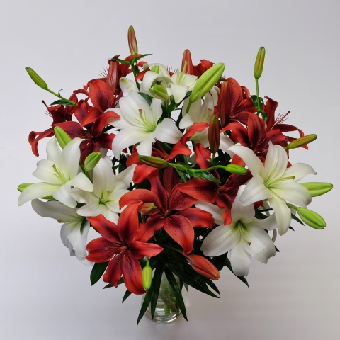 Red & White Asiatic Lilies Combo