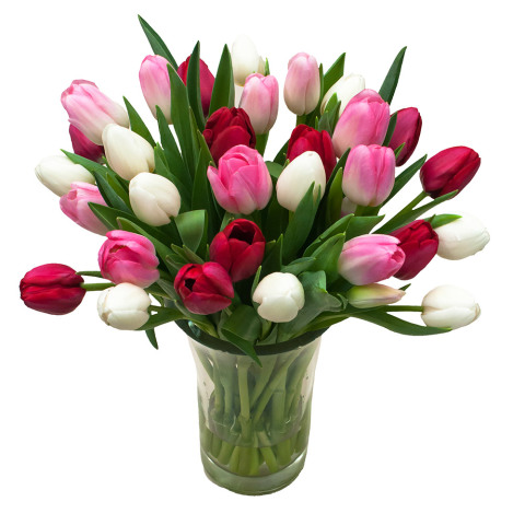 Red, Light Pink & White Tulips
