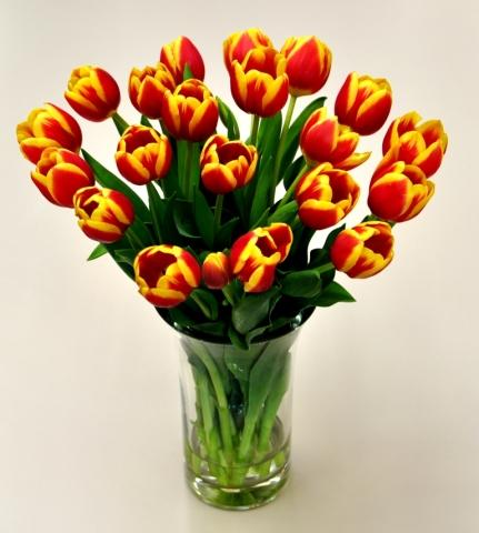 Multi Color Cut Tulips