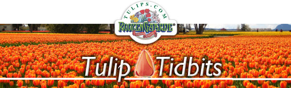 Tulips tidbits