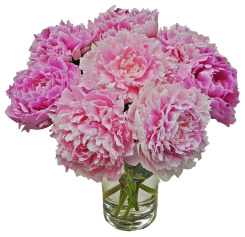 Grower's Choice Peonies