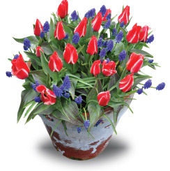 Container Collection - Plaisir & Muscari