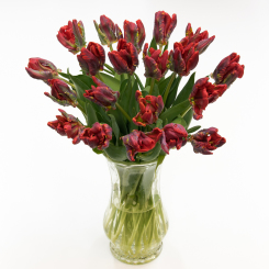 Fresh Cut Flowers & Spring Flowering Bulbs: Tulips.com - photo #43