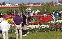 Show gardens at RoozenGaarde